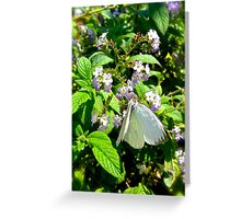 White Butterfly Greeting Card