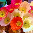 Poppy Me Colourful by ShotsOfLove