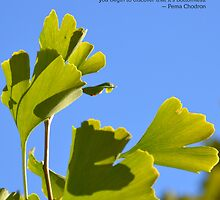 Gingko leaves at Dorje Ling Retreat Centre by tashicholing