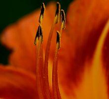 Graceful Lily by GLibby