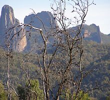 Approaching the High Tops. Warrumbungle National Park. by Rita Blom