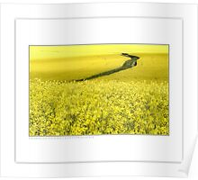 Canola (and rabbit) Poster