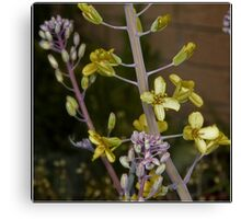 Red Cabbage Flower Macro Canvas Print
