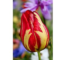 Tulip bokeh Photographic Print