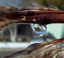 Nature's crystal ball  by Jokaylena Leonard