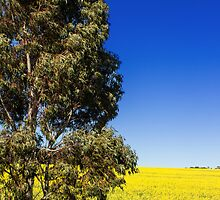 Rural South Australia by beckysmith86