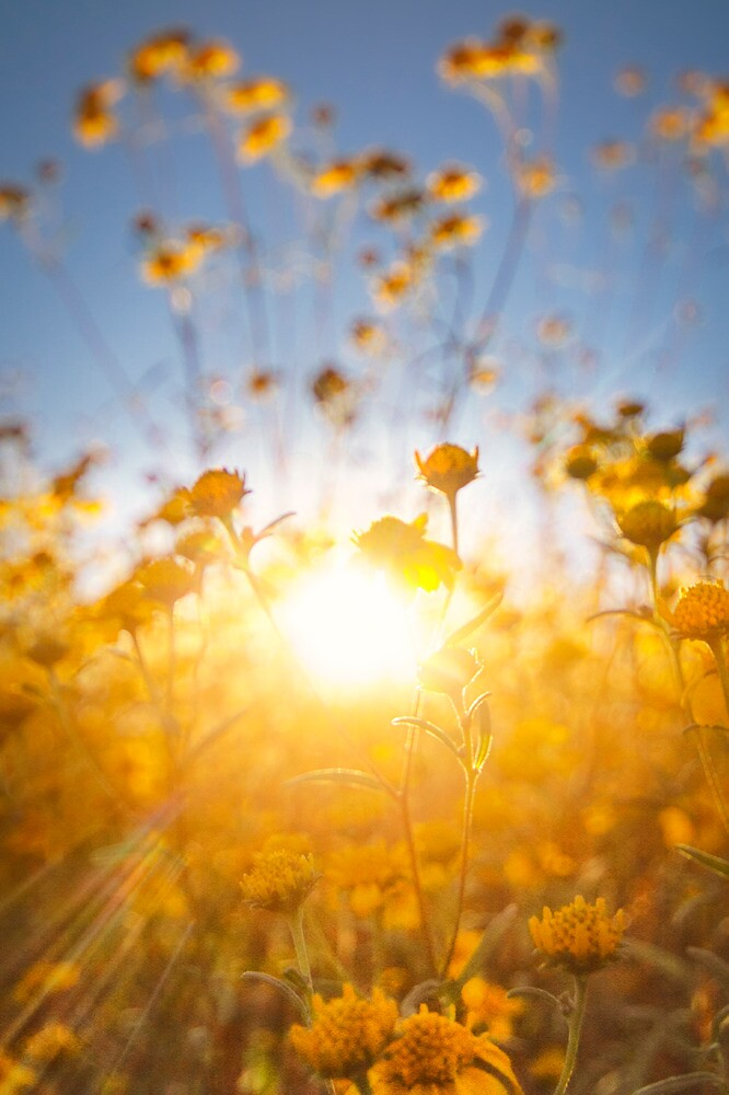 Sun Spot by Bob Larson
