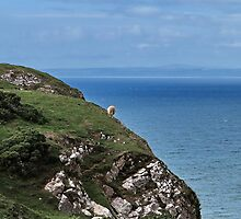 Crazy sheep by Bluesrose