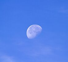 September Moon by Sue Robinson