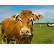 Oil Painted Limousin Cow Photographic Print