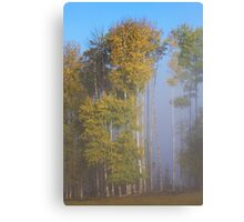 Tall Trees Early Autumn Canvas Print