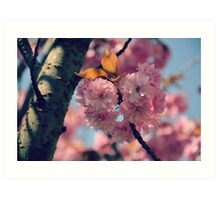 Cheery Cherry Blossoms Art Print