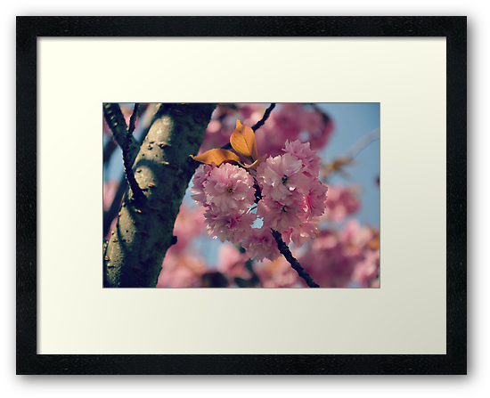 Cheery Cherry Blossoms by BirgitHM