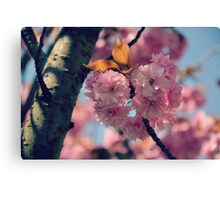 Cheery Cherry Blossoms Canvas Print