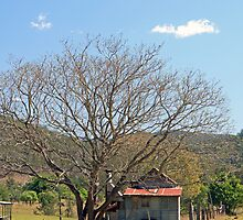 the old shed under the tree by SharronS
