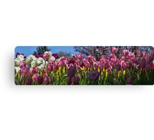 Tulip Row Canvas Print