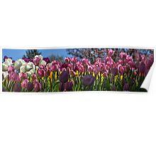 Tulip Row Poster