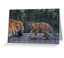 Tiger Cub in the Rain Greeting Card