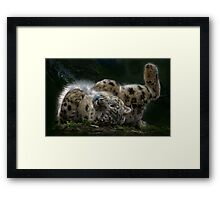 Rolling in the sunlight Framed Print