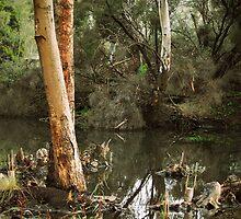 Eucalyptus at Kennington Resevoir By Lorraine McCarthy by Lozzar Landscape