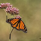 Autumn Monarch by KatMagic Photography