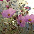 Cosmos - End of Season (1) by goddarb