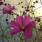 Cosmos - End of Season (2) by goddarb