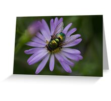Green Bottle Fly [Lucilia caesar] Greeting Card