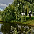 Willow Reflection by Lotus0104