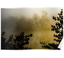 Silhouetted Trees  Poster