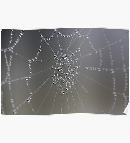 Foggy Morning Spider Web  Poster