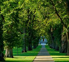 Tree Lined Path by Photopa