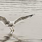Gull On Ice  by KatMagic Photography