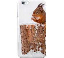 Red squirrel gathering food for Winter iPhone Case/Skin