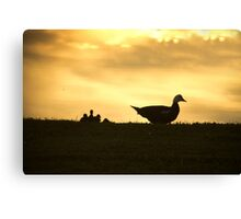 Momma Muscovy Duck and Baby Ducklings at Sunrise Canvas Print