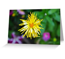 Scraggly Calendula Greeting Card