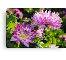 Violet Flowers Canvas Print