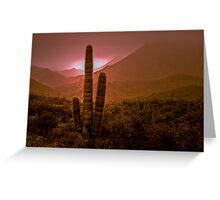 Cactus with Setting Sun Greeting Card