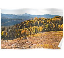 Aspens of Scale Poster