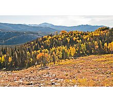 Aspens of Scale Photographic Print