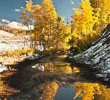Aspens in Puddles by Audrey Farber
