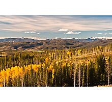 Aspens of Scale 2 Photographic Print