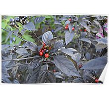 Black Pearl Peppers Poster