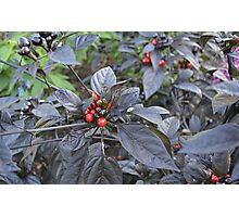 Black Pearl Peppers Photographic Print