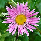 Aster Beauty by Orla Cahill Photography