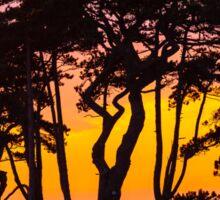 Trees sunset Sticker