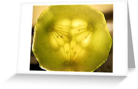 Cucumber Center...Macro by Diane Arndt