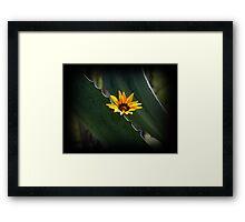Beautiful Parasite Flower On An Agave Framed Print
