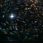 Underwater world by merrychris