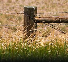 Grasslands Under Control by Audrey Farber